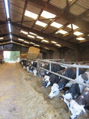Vaches laitières Yvetot Seine Maritime CFA Naturapôle